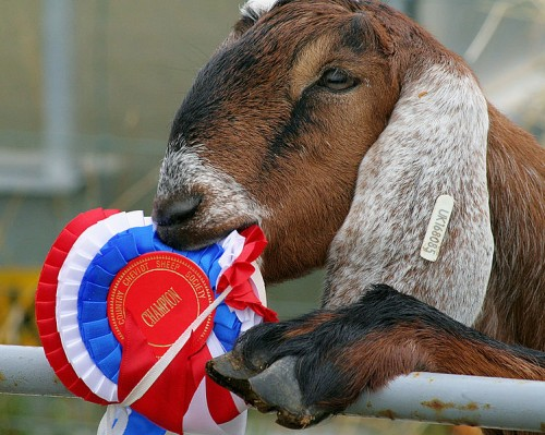 """Eastman admissions director (not pictured) on why college rankings """"get his goat"""""""